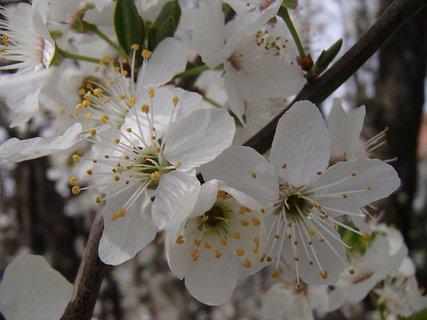 FOTKA - jar sa hlási