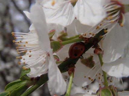 FOTKA - schovala sa pod kvet