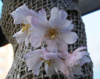 FOTKA - kvítky stromu