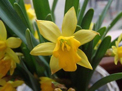FOTKA - z kvetináča