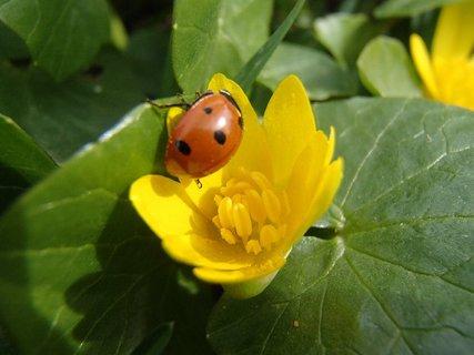FOTKA - lezie po okraji kvetu