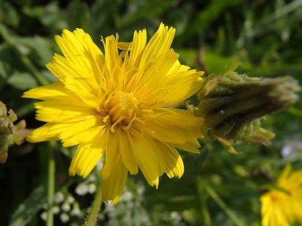 FOTKA - zvláštne kvitne