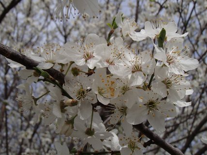 FOTKA - jar v bielom