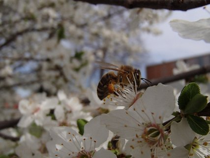 FOTKA - nožička plná peľu