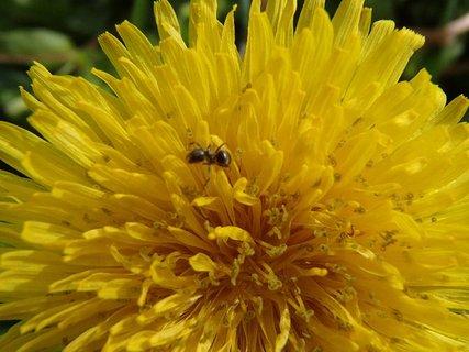 FOTKA - aj mravec zavítal