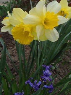 FOTKA - foto zo záhrady