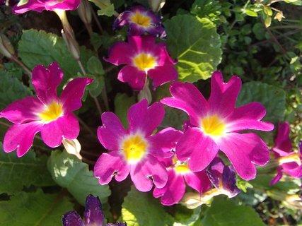 FOTKA - na záhradke