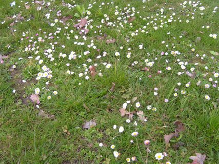 FOTKA - pohled do trávy