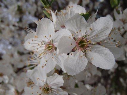 FOTKA - nežná biela jar