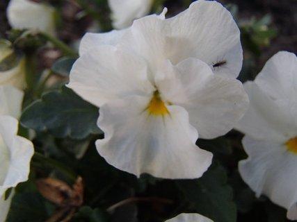 FOTKA - biela sirôtka