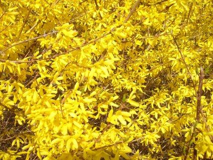 FOTKA - žluto