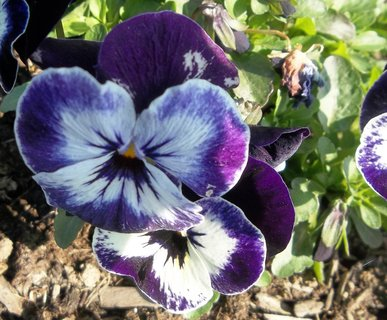 FOTKA - Mace�ky kvetou cel� rok