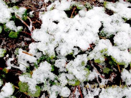 FOTKA - jahodový pro sníh není ani vidět