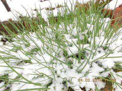 FOTKA - pažitka v sněhu