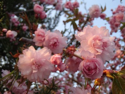 FOTKA - už krásne kvitne