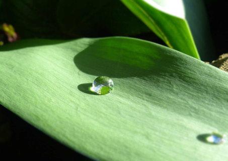 FOTKA - jako diamant