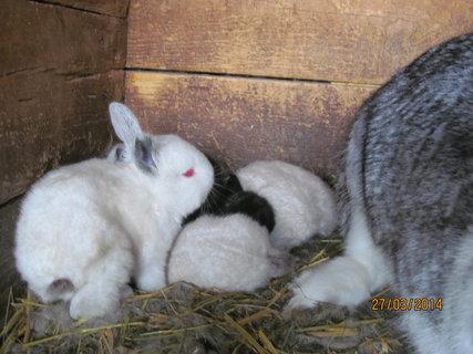 FOTKA - Šedá mamina a její dětičky
