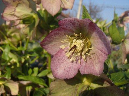 FOTKA - kvitne v záhrade