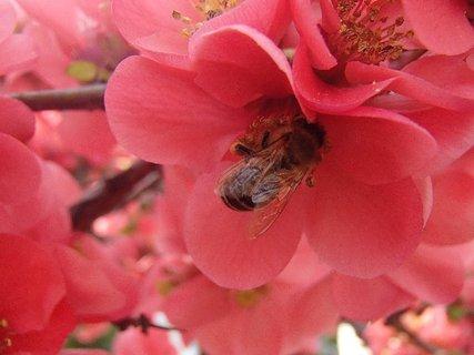 FOTKA - zber peľu