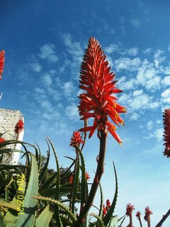 FOTKA - Antibes v únoru 2014