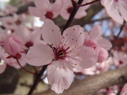 FOTKA - ružovkastý kvietok