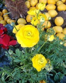 FOTKA - květiny v Mentonu