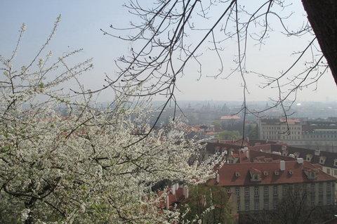FOTKA - Ze zahrad pod Pražským hradem -  první bílá kvítka