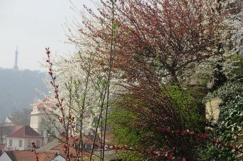 FOTKA - Ze zahrad pod Pražským hradem -  bílá i růžová