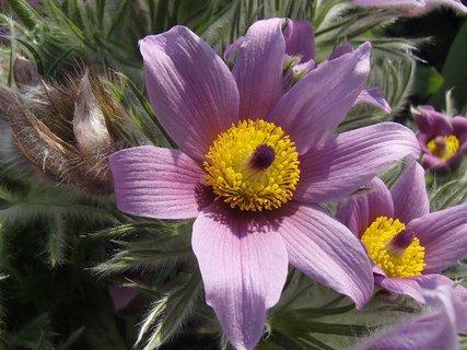 FOTKA - bledofialový