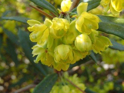 FOTKA - žltozelené kvety