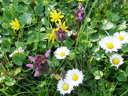 FOTKA - Pestrý trávník