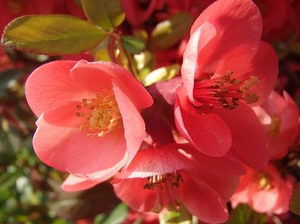FOTKA - krásne kvitnú