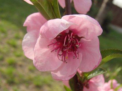 FOTKA - pohľad do ružového kvetu