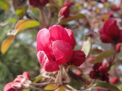 FOTKA - už bude kvitnúť