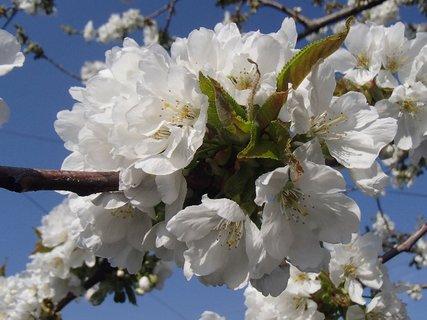 FOTKA - jar je krásna