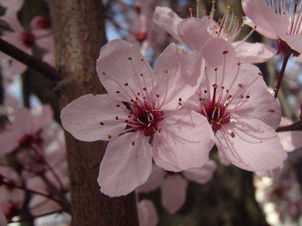 FOTKA - ružová dvojka
