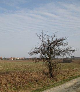 FOTKA - stromek u silnice