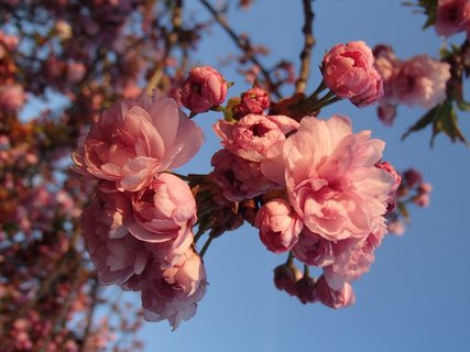 FOTKA - jar mám rada