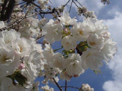 FOTKA - všetko v kvete