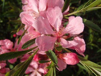 FOTKA - ružová so zelenou
