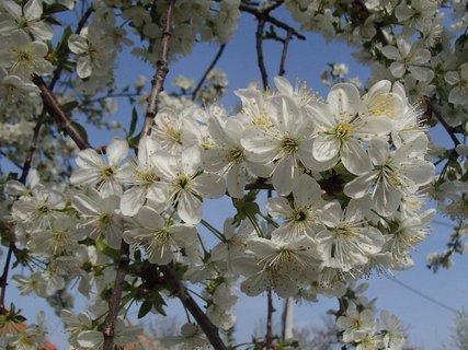FOTKA - je samý kvet