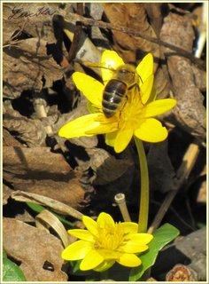 FOTKA - Včelka na orseji