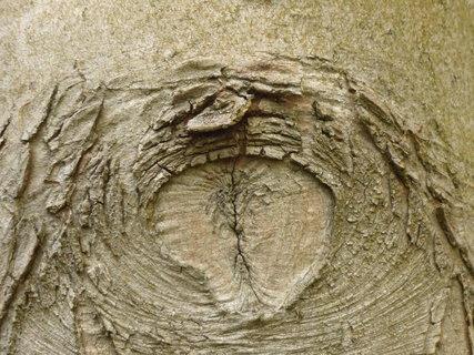FOTKA - kura stromu