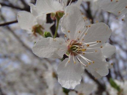 FOTKA - krása bieleho kvetu