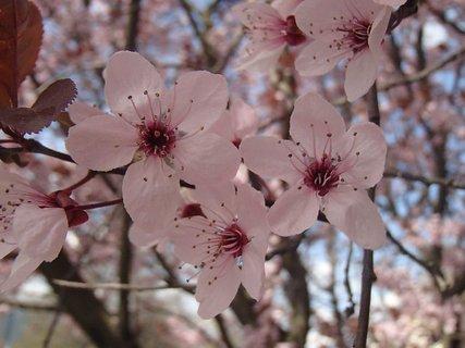 FOTKA - krása ružových kvetov