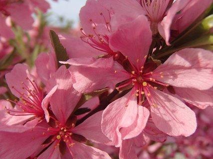 FOTKA - na ružovom kríku
