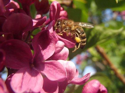 FOTKA - aj včielku už prilákal