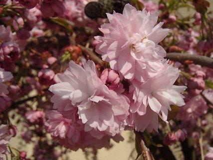 FOTKA - jar v ružovom šate