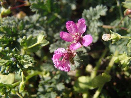 FOTKA - lúčne kvety