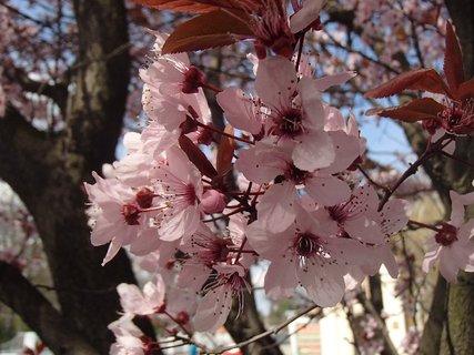 FOTKA - ešte kvitnú a sú krásne